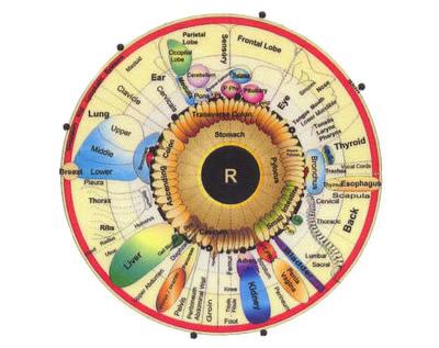 Springfield Holistic Retreatiridology Is The Scientific Analysis Of